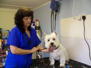 Part Time Course Dog Grooming Level 2 And 3 At Bridgend College